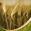 Rohstoff-Trading mit Agrarrohstoffen